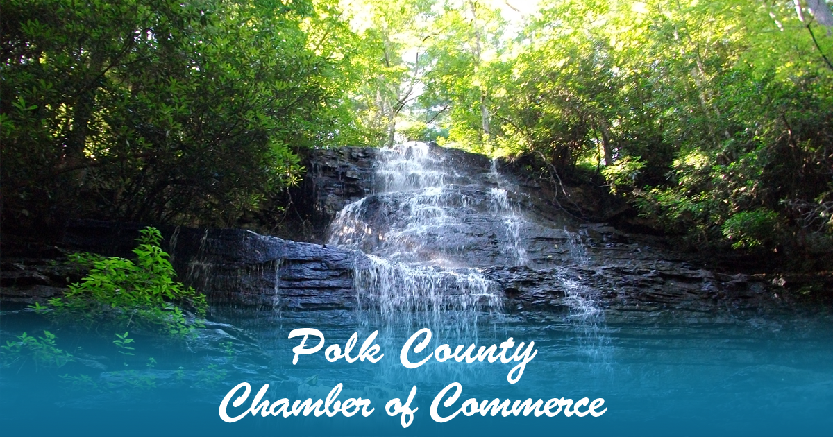 polk county drivers license cost